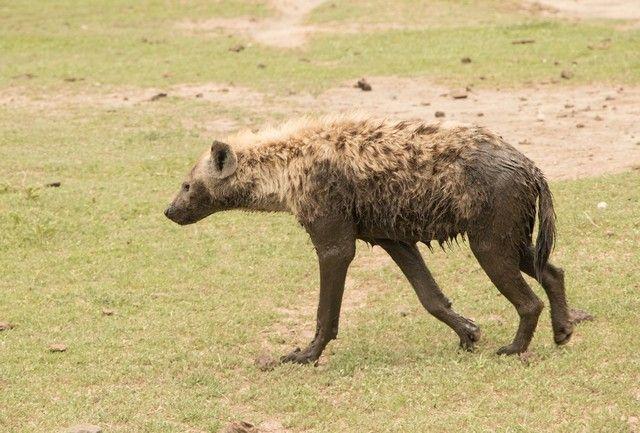 area de conservacion del ngorongoro tanzania (16)