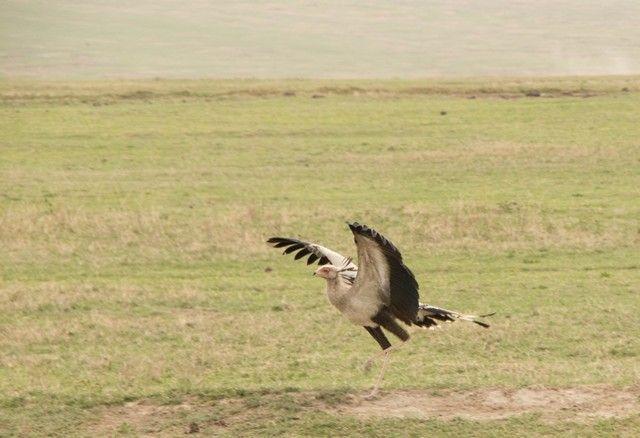 area de conservacion del ngorongoro tanzania (17)