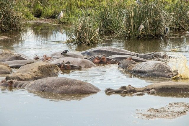 area de conservacion del ngorongoro tanzania (25)