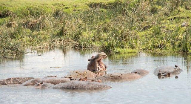 area de conservacion del ngorongoro tanzania (27)