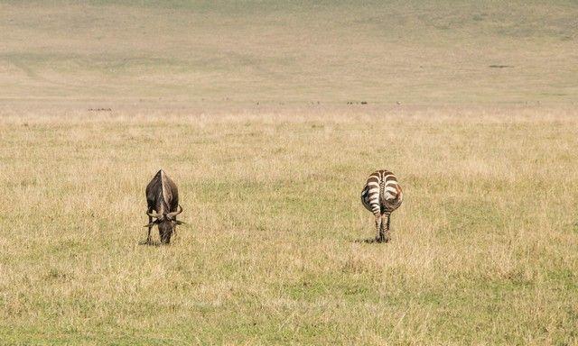 area de conservacion del ngorongoro tanzania (4)