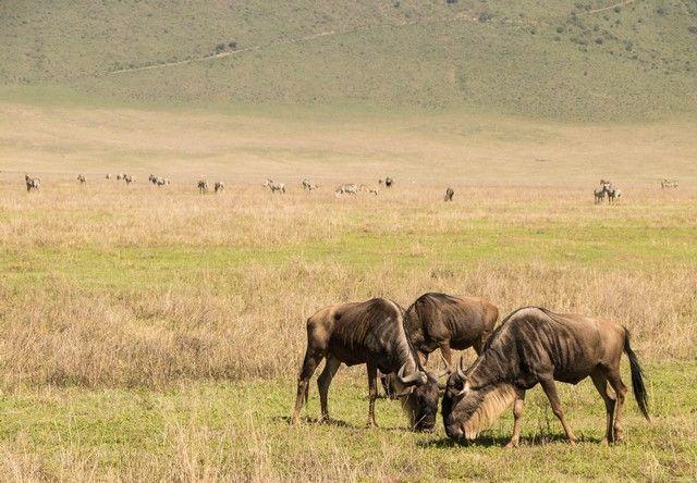 area de conservacion del ngorongoro tanzania (5)