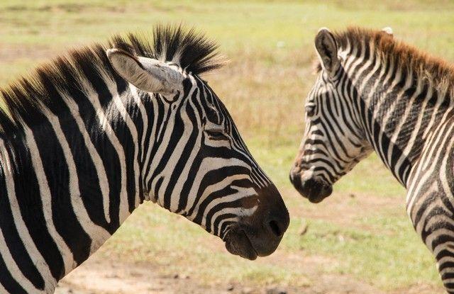 area de conservacion del ngorongoro tanzania (8)