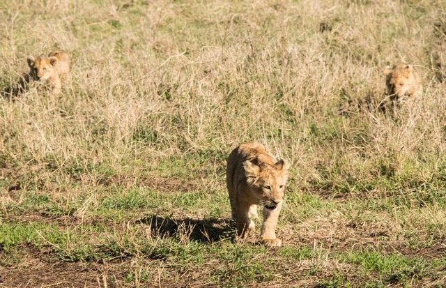 ngorongoro area de conservacion tanzania (17)
