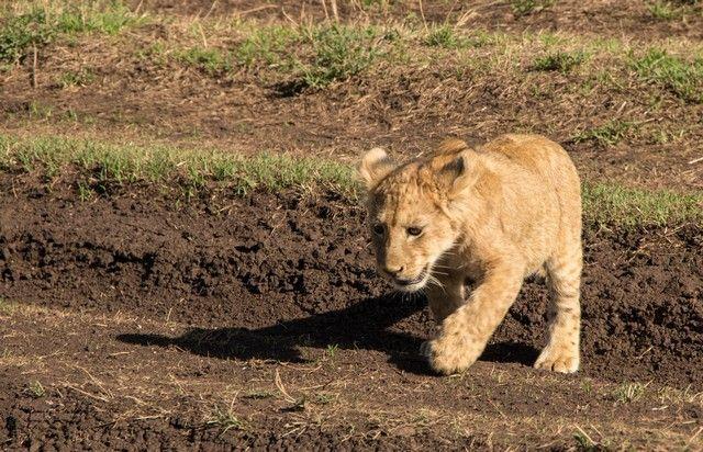 ngorongoro area de conservacion tanzania (18)