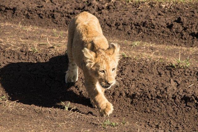 ngorongoro area de conservacion tanzania (19)