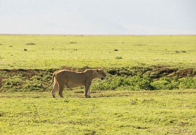 ngorongoro area de conservacion tanzania (22)