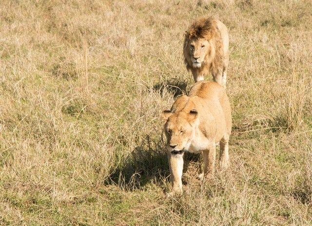 ngorongoro area de conservacion tanzania (27)