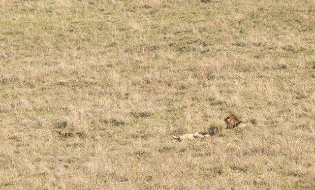 ngorongoro area de conservacion tanzania (6)