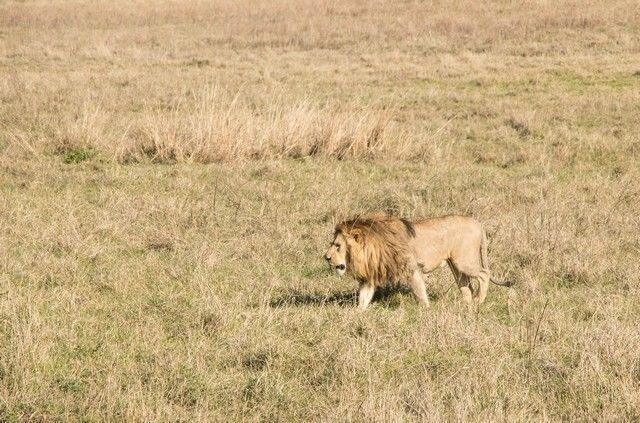 ngorongoro area de conservacion tanzania (9)