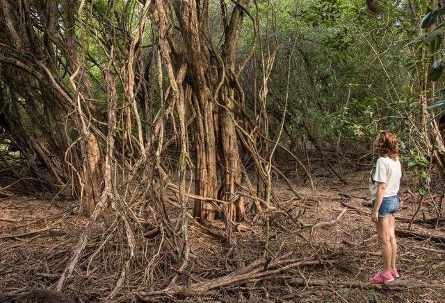 calakmul campeche peninsula de yucatan mexico (3)