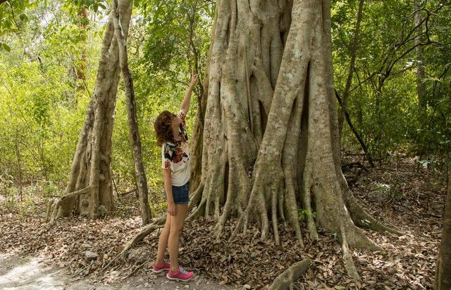 calakmul campeche peninsula de yucatan mexico (9)