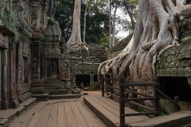 ta prohm tour corto por los templos de angkor camboya (15)