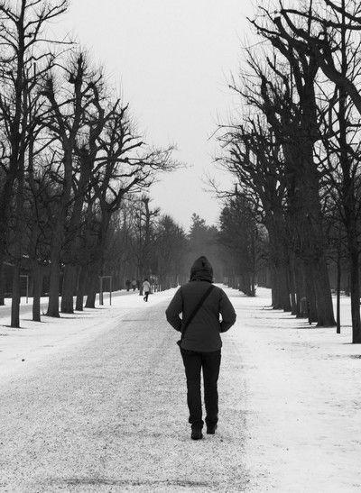 Palacio Schönbrunn invierno navidad