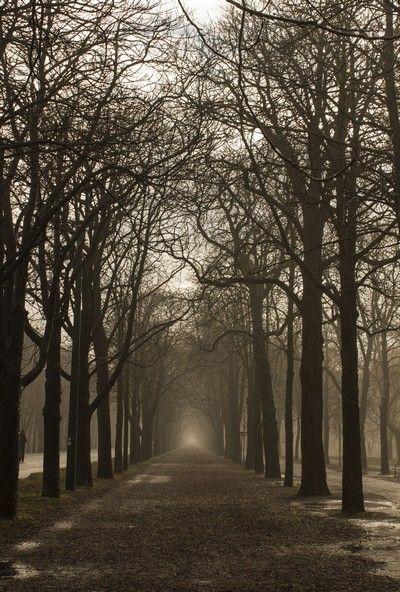 prater navidad niebla
