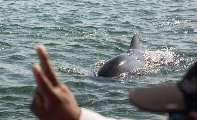 delfines en paracas isla ballestas peru