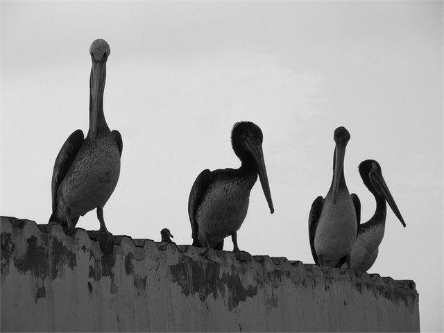 lagunillas reserva natual de paracas peru