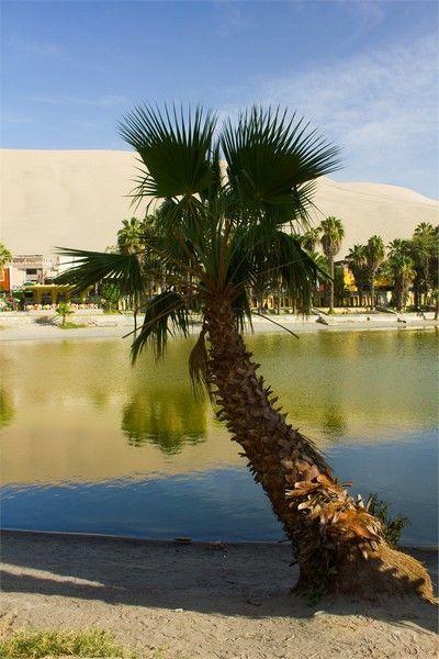 palmera oasis huacachina peru