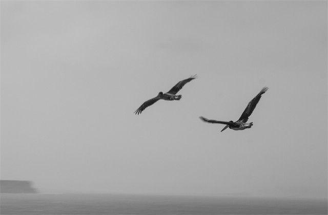 reserva natural de paracas aves 2