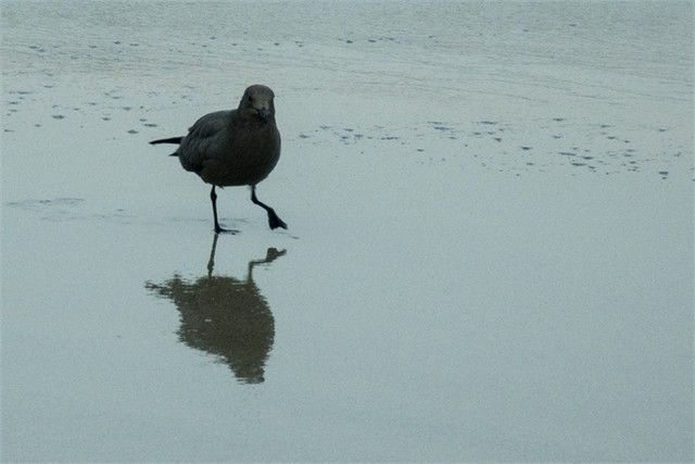 reserva natural de paracas aves