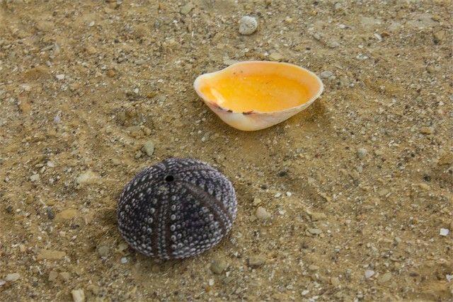 reserva natural de paracas conchas