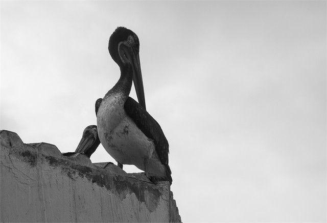 reserva natural de paracas peru