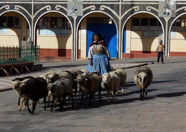amantani plaza ovejas peru