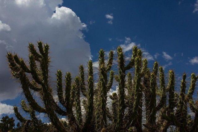 cactus en cuzco peru