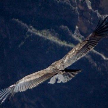 El Valle del Colca, Mirador del Condor.