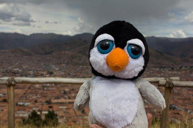 ¿Os creiais que Pingus no nos acompañaba? Pues no se ha perdido ni un solo sitio.
