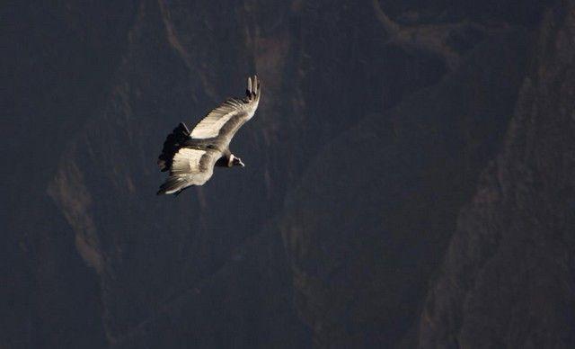 vuelo del condor peru 2