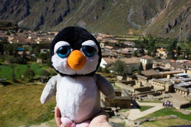 Pingus en Ollantaytambo