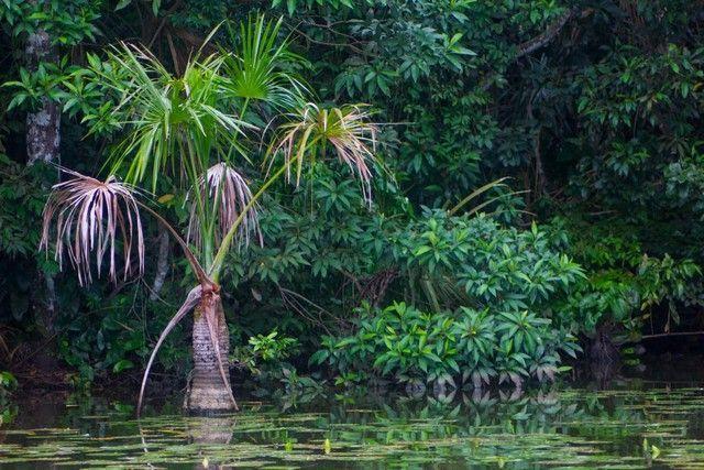 lago sandoval reserva tambopata peru 3