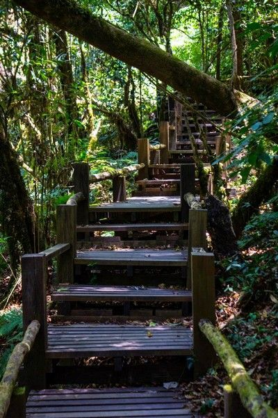 escaleras Ang Ka Nature Trail