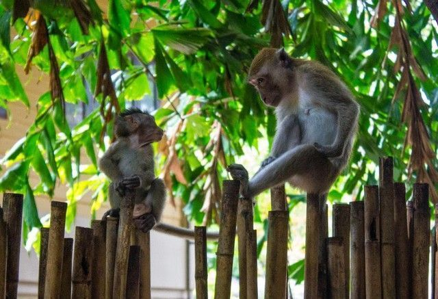 monos en railay