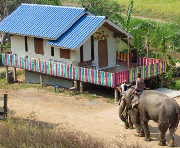 woody elephant park portada