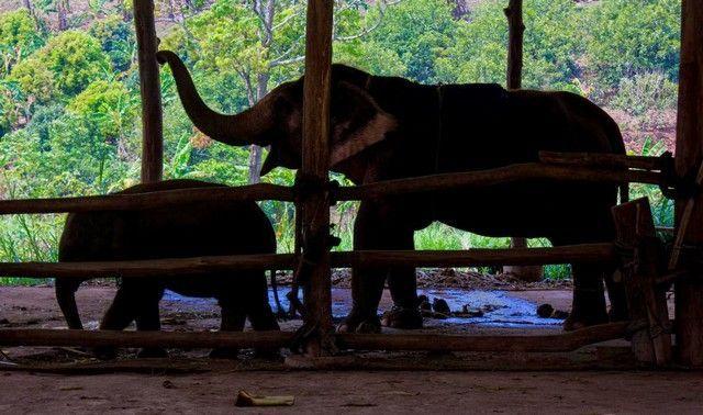woody elephant training elefantes