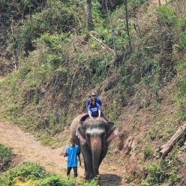 Woody Elephant Training