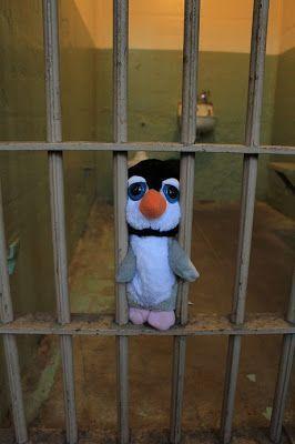 pingus en alcatraz san francisco