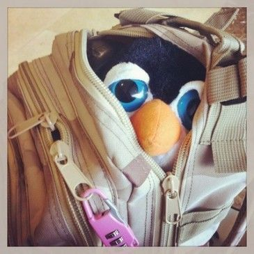Un pingüino en mi mochila
