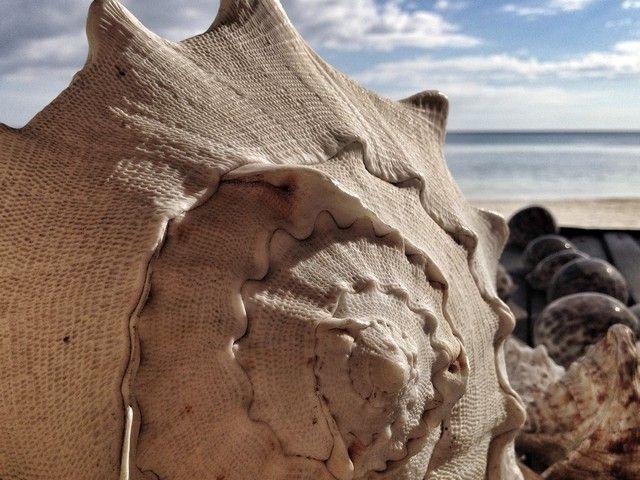 caracola en paliton beach siquijor