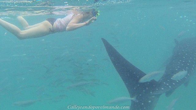 oslob tiburones ballena 1