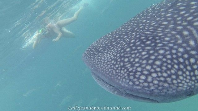oslob tiburones ballena (4)