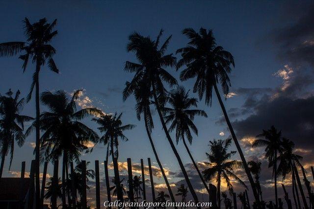 palmeras bantayan island filipinas