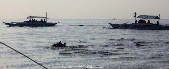 avistamiento delfines balicasag alona beach