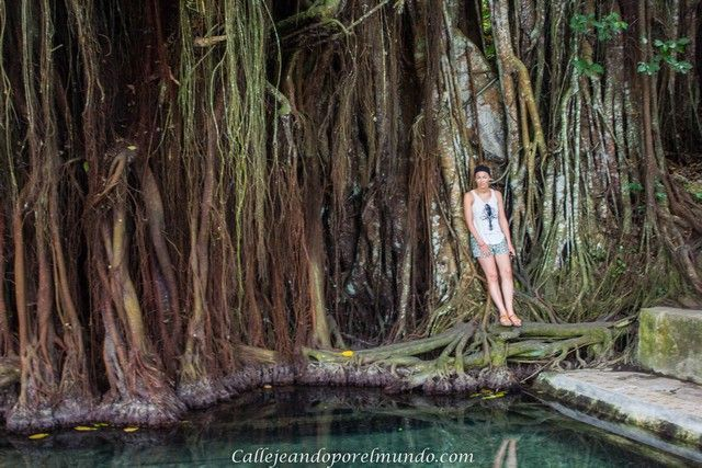 balete tree siquijor filipinas
