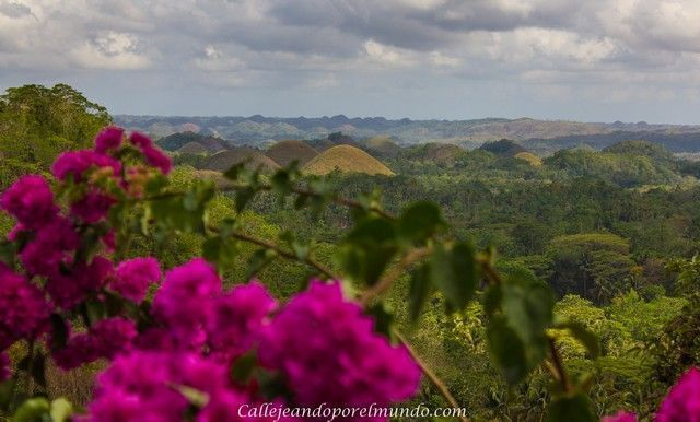 Bohol: Chocolate Hills, tarsiers y un paseo por el río.