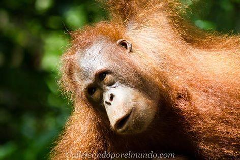 Borneo en 14 días