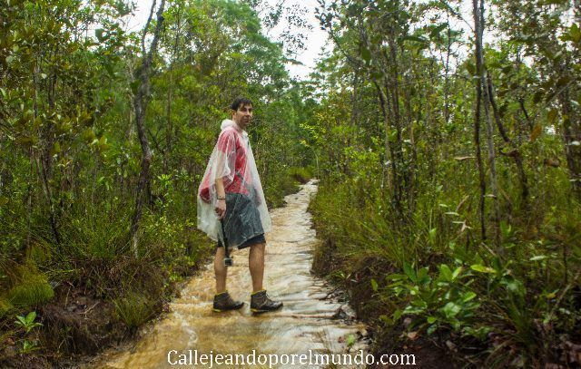 ruta 5 parque nacional bako malasia borneo