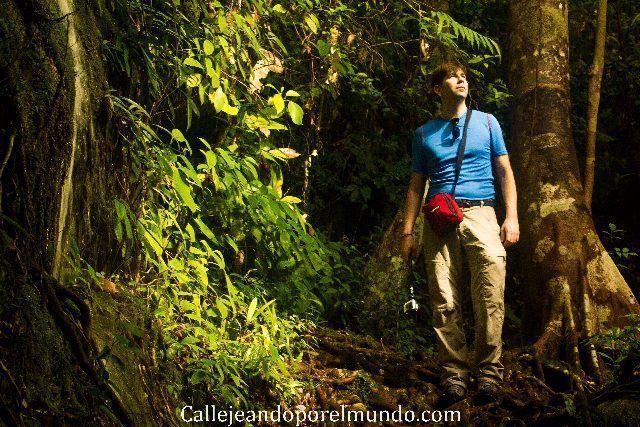ruta paku parque nacional bako borneo malasia